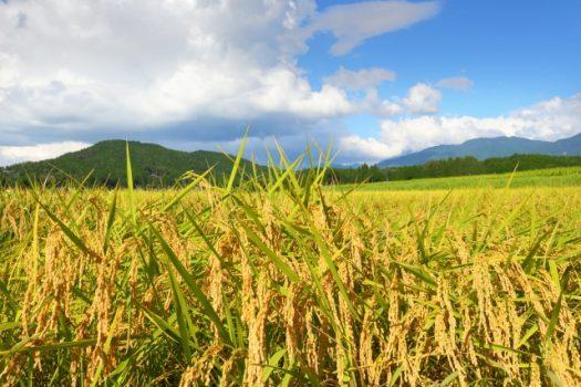 スマート農業って…?農機具買い替えの際にお得な方法とは?